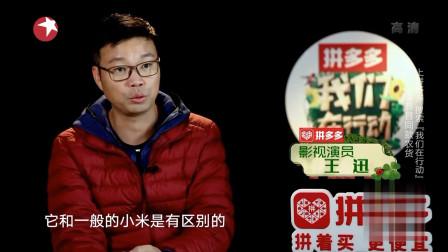 我们在行动:生产小米已经是当地的脱贫产业之一,网友:优秀!