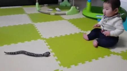 爸爸给娃买了个电动蛇玩具,直接把小娃给吓坏了,想抓又不敢抓