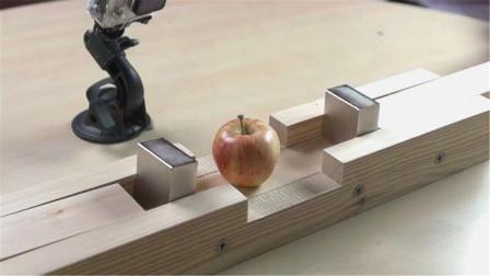 钕磁铁的磁性有多大?将苹果放在钕磁铁之间,看下场就知道