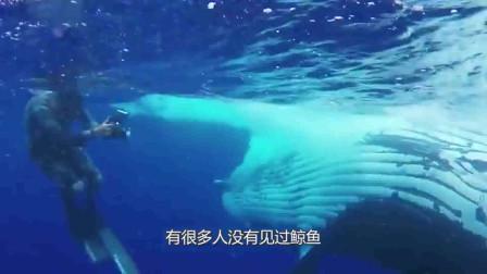 海边出现10米长鲸鱼,却被人们切割成条块,网友:难道不怕爆炸