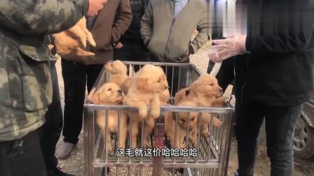 农村狗市:实拍配狗现场多人围观,母狗看来没经验,试了好几次都没成功