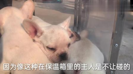 农村狗市:实拍苏北狗市,人挤人从几百到几千的狗都有,是不是比宠物店便宜