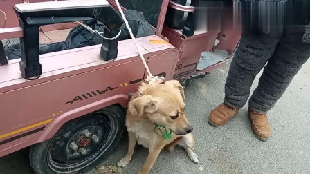 农村狗市:狗贩子抓狗,大夹子威力巨大,可怜的小狗无法反抗