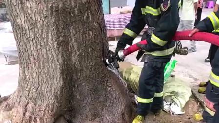 这棵树自燃了,消防员立马就赶过来灭火,很奇怪的是树怎么会自燃