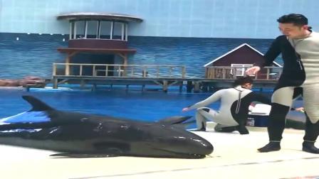 鲸鱼:又拿假鱼糊弄我,我聪明着呢!