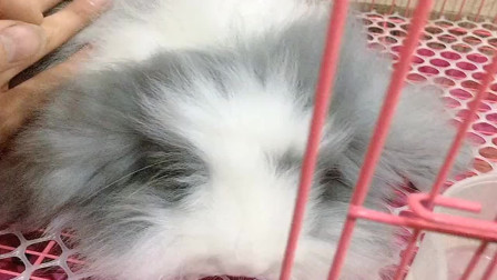 逛街看到一只超萌的小动物!这是兔子?
