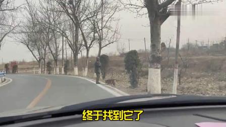 法斗:真是个不省心的,跟个陌生人跑了!找了大半天才找到!