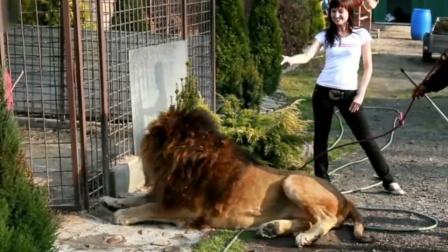 近距离与狮子合影,不料一个动作将其惹毛!
