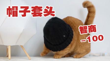 据说这样可以测出猫咪智商?试了试自家猫