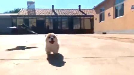 鸟:奔跑吧狗子!狗:好的老大