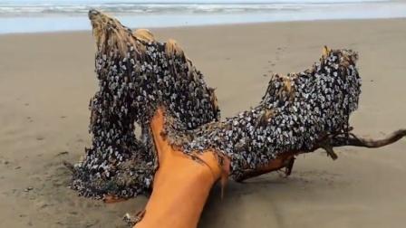 """海上漂来一根""""烂木头"""",上面有密密麻麻的生物,让渔民发了横财"""