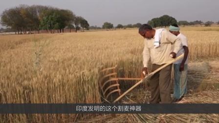 印度发明的收割神器,一天轻松割6亩,太省时省力!