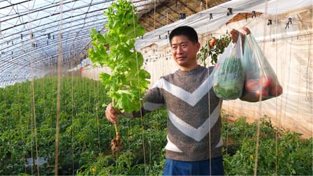 东北农村大棚里30度咋干活?豆角西红柿青菜啥都有,又连吃带拿