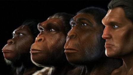 人类凭什么比其他动物聪明?