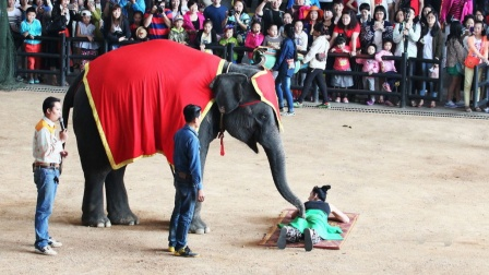 泰新马之旅 东芭乐园猴子摘椰子 大象精彩表演