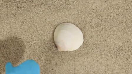 我们把捡到的贝壳做成了项链,美美哒