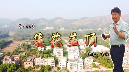 带你去观赏广东化州有着456年历史明代古墓莲花盖顶