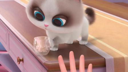猫咪爱摔东西怎么办