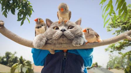 小鸟伙同弟兄们,一起恶搞猫老弟,结局那是解气又治愈!
