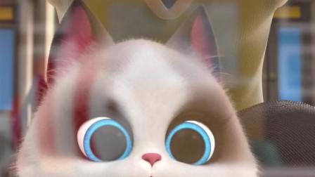 小猫咪的喜好还真是出人意料