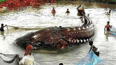 黑龙江渔民捕到中国最大淡水鱼,重达上千斤,专家看后脸色大变?