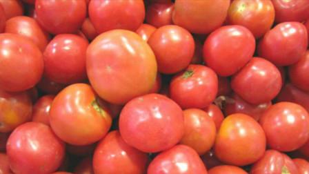 买西红柿,记得看看这个部位,催熟西红柿一眼辨别,看完提醒家人