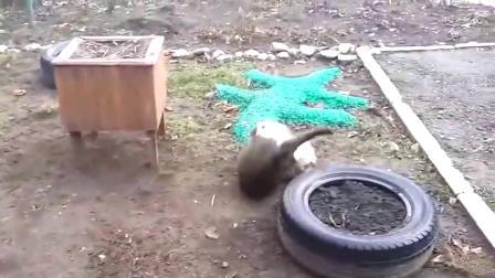 狸花猫打架是老手,一手按住对方使劲咬,咬掉一嘴毛