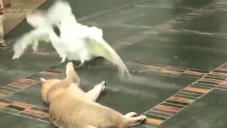 鹦鹉:天太热了,我给你扇扇风。橘猫:我谢谢你啊!