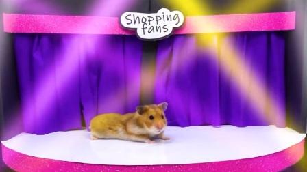 仓鼠逛购物中心,看起来像个购物狂啊