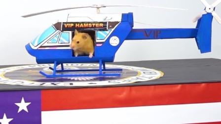仓鼠宝宝来国外旅游,乘坐飞机而来真是享受啊
