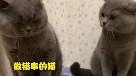 """搞笑配音:女猫教训""""老公"""",太人性化了!"""