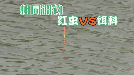 同样调钓,用红虫浮漂动作大饵料看不到口,调整这点解决难题
