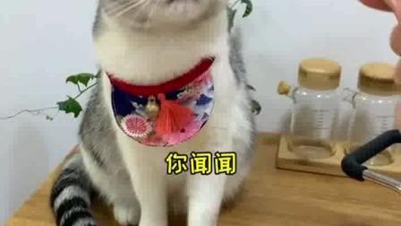 猫咪学习什么,我来拍给大家看(我真的太无聊了
