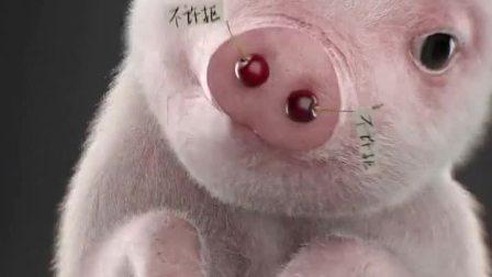 一只被甩猪的崩溃,你不会懂