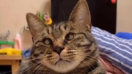 老实告诉我,你们见过眼睛长这样的猫咪吗?