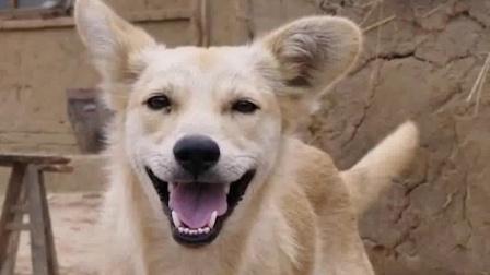 山海情超细节:整部剧最强的主角,居然是一只狗