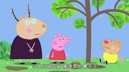 小猪佩奇:佩德罗要把小乌龟从树上摇下来,结果砸掉了自己的眼镜