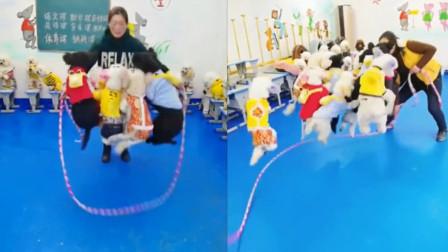 不可思议!安徽宿州12只狗子一起跳绳,网友:成精了吗?