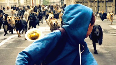 狗狗被主人抛弃后彻底绝望,统领200只狗兄弟,疯狂的报复人类!