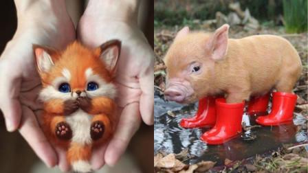 《那些可爱的小动物》_系列01