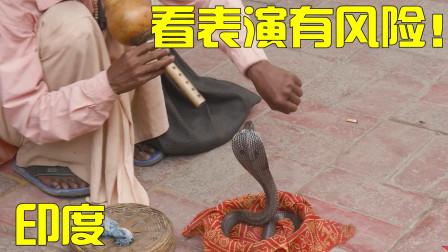 在印度,再也不敢看眼镜蛇表演了,存在各种风险!拍于印度新德里