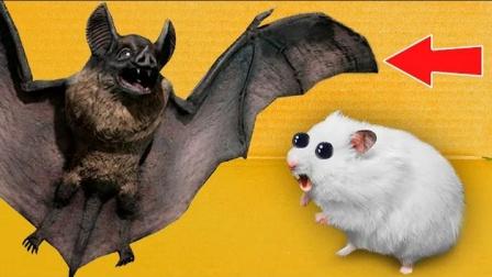 仓鼠闯关被蝙蝠挡住去路
