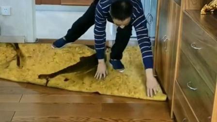 这是哪里买的仿生地毯?