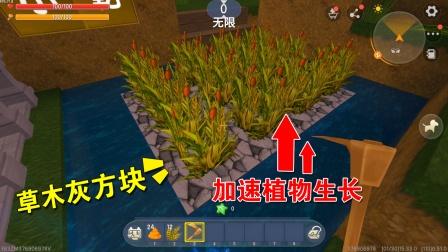 迷你世界:草木灰方块富含营养物质,能加速植物生长,适合种小麦