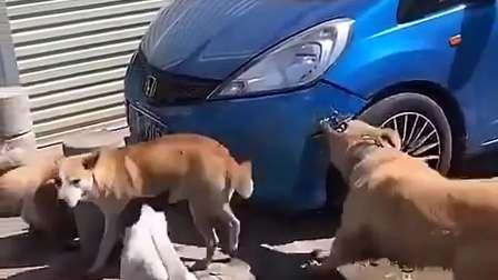 这车主估计得罪狗了??