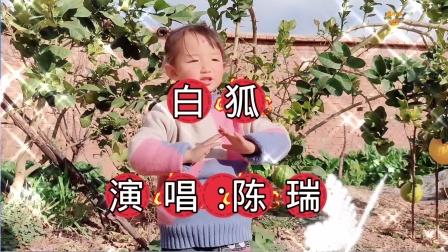 《白狐》-演唱:陈瑞-大理巍山