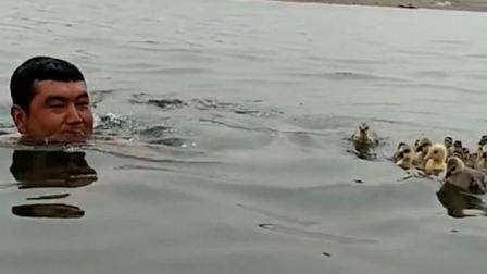 鸭爸爸带小鸭子,来游泳了。