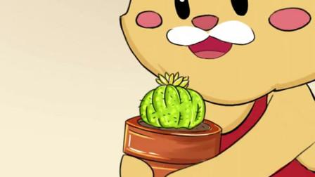 你们家的仙人掌会长果子吗?