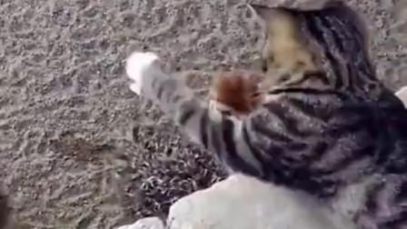 求猫的心理面积,太可爱了!