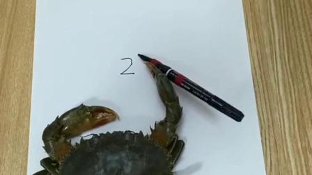 小螃蟹这么聪明,不吃可惜了呀